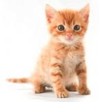 Kittens Sale Sydney